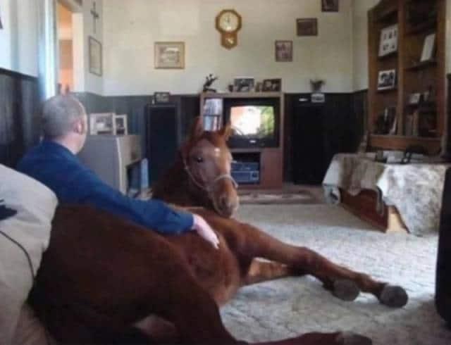 мужчина с лошадью в гостиной