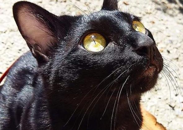 черный кот с рыжими глазами