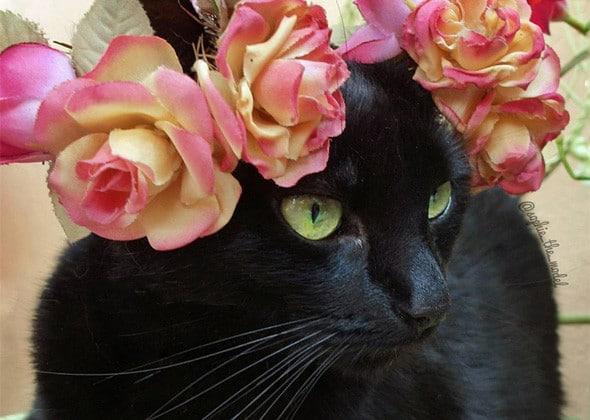 черная кошка в венке из роз