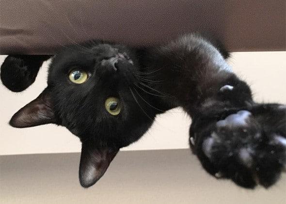 черный кот с зелеными глазами