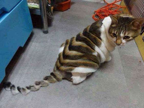 Кот, подстриженый гармошкой