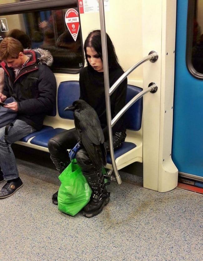девушка с вороной