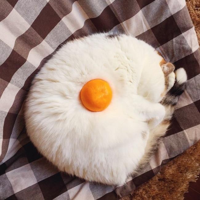 кот и мандарин