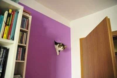 кот торчит из стены