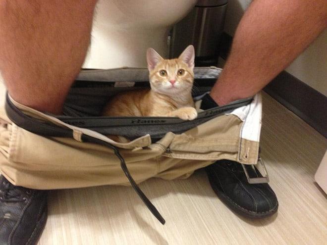 рыжий котенок сидит в штанах