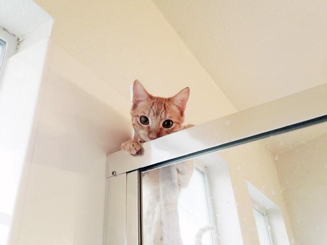 рыжий кот заглядывает в душевую кабинку
