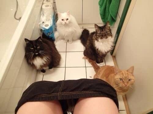 коты в туалете