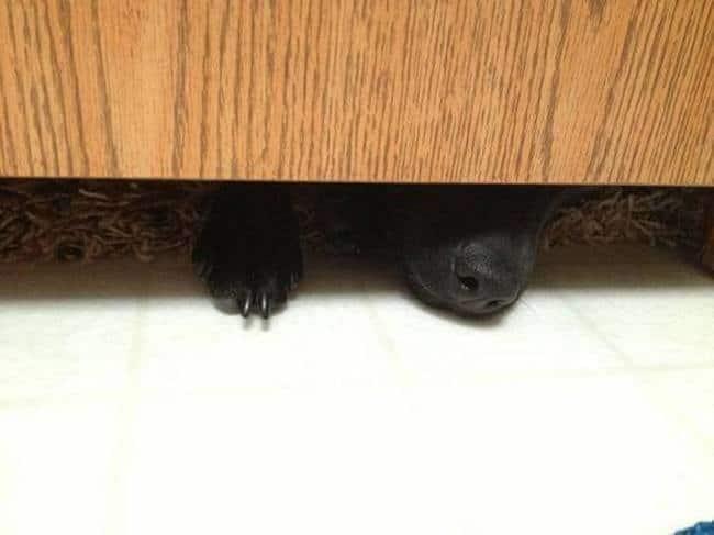 черная собака под дверью