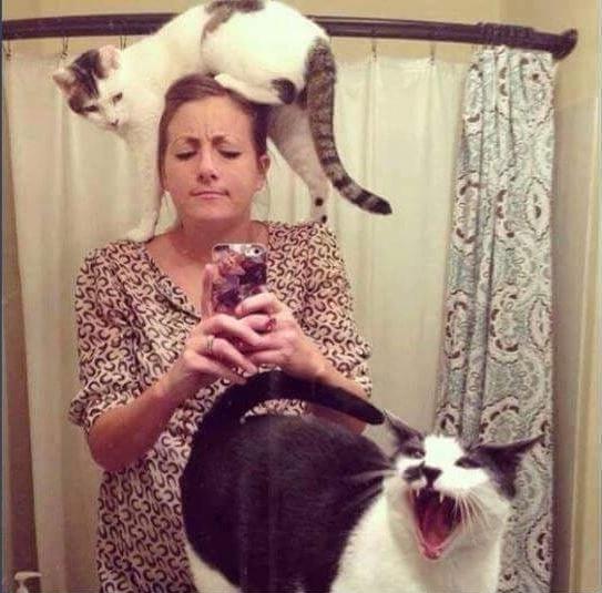 женщина фотографирует себя в зеркало с котами
