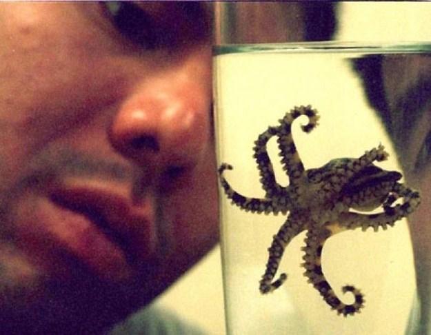синекольчатый осьминог
