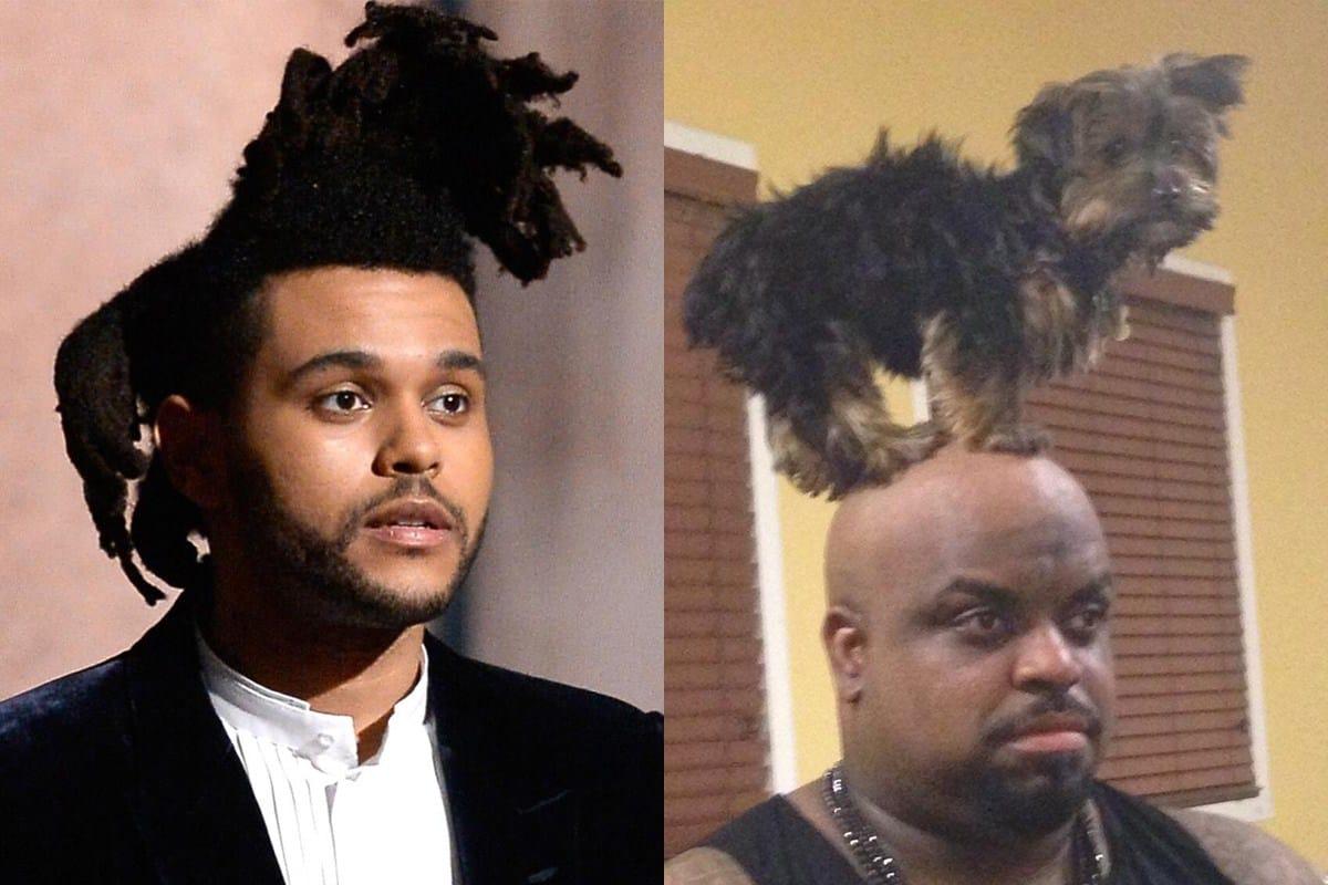 певец уикенд и чернокожий мужчина с собакой на голове
