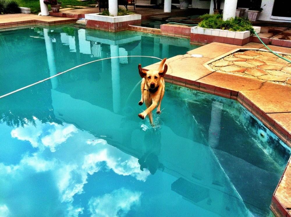 собака падает в бассейн