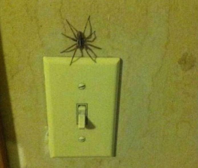 паук рядом с выключателем