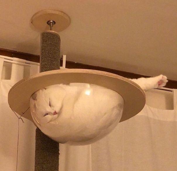 кот спит в стеклянном сосуде