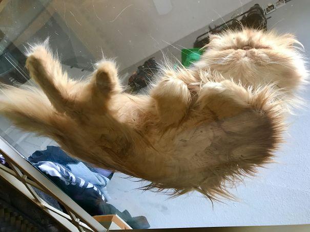 рыжий кот спит на стеклянном столике