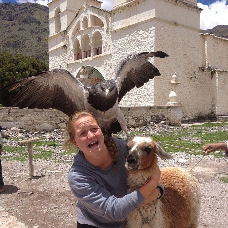 женщина с животными