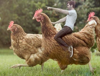 парень верхом на большой курице