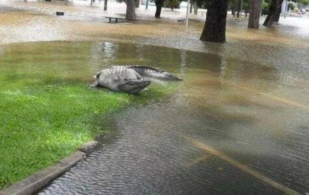 крокодил на улице