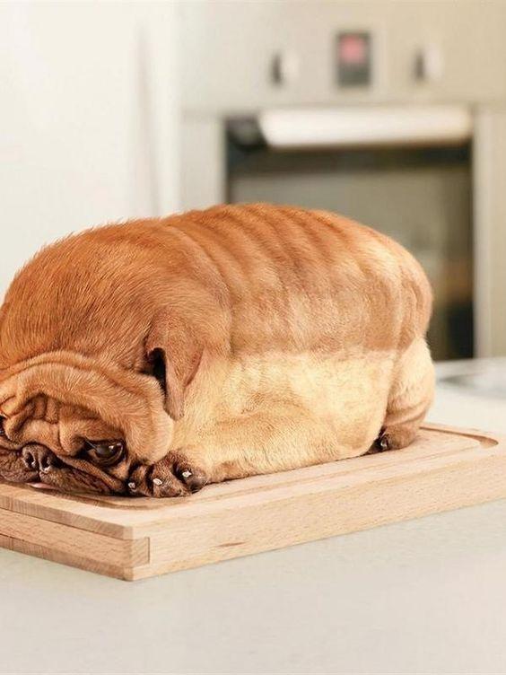 Собака калачиком лежит на доске
