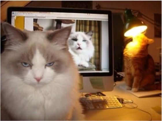 коты сидят на столе