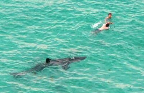 акула и парни в воде