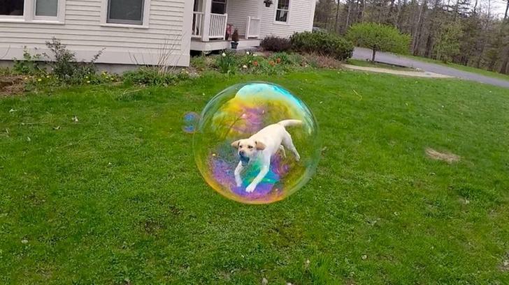 собака в мыльном пузыре