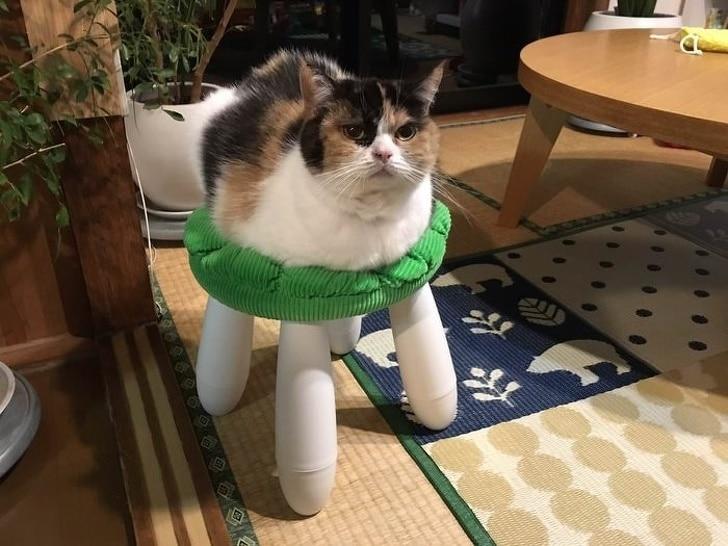 кошка сидит на стуле