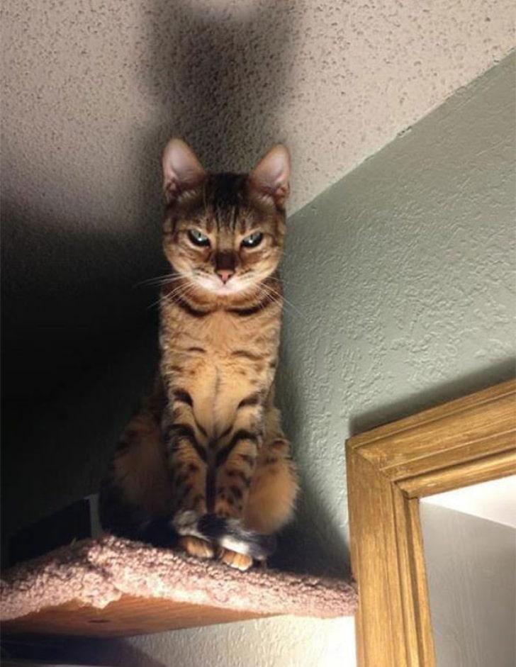 кот сидит под потолком