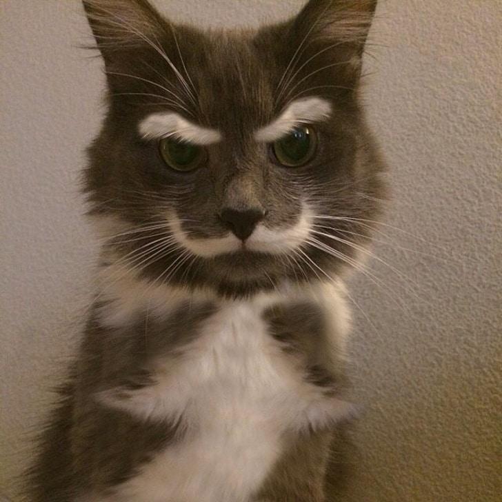 серый кот с белыми усами и бровями