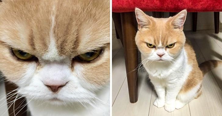 злой рыжий кот