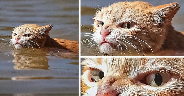 рыжий кот в воде