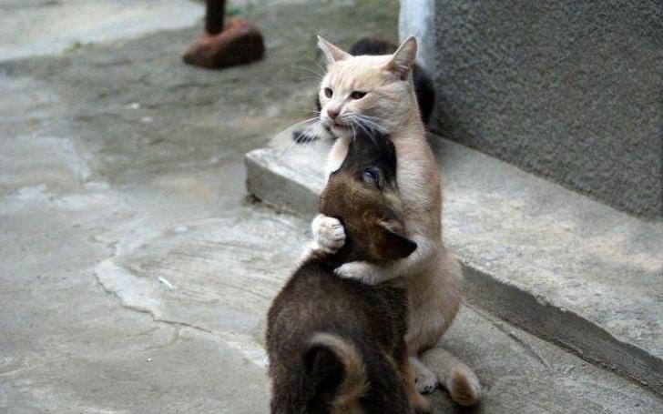 кот обнимает собаку