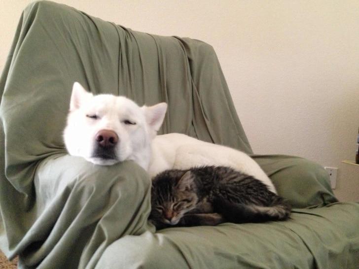 кот и собака спят на кресле