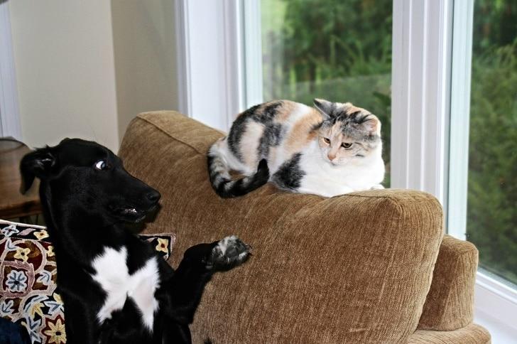 кот лежит на спинке кресла рядом с собакой