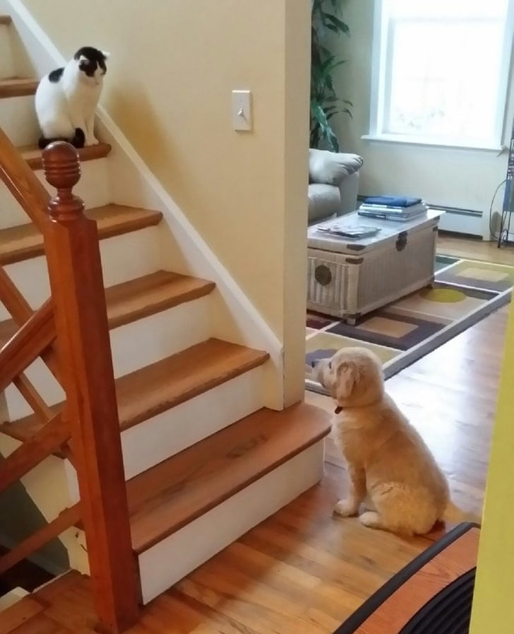 щенок смотрит на кота на лестнице