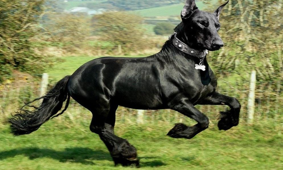 черная лошадь с головой собаки