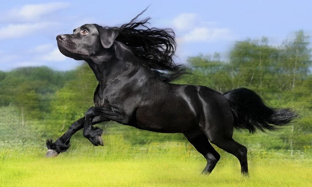 черный конь с головой собаки