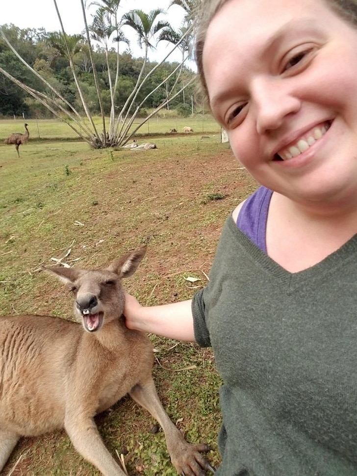 кенгуру улыбается