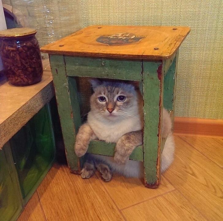 кот сидит под табуреткой