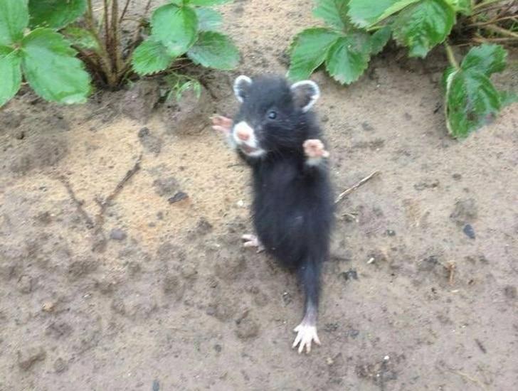 милый мышонок