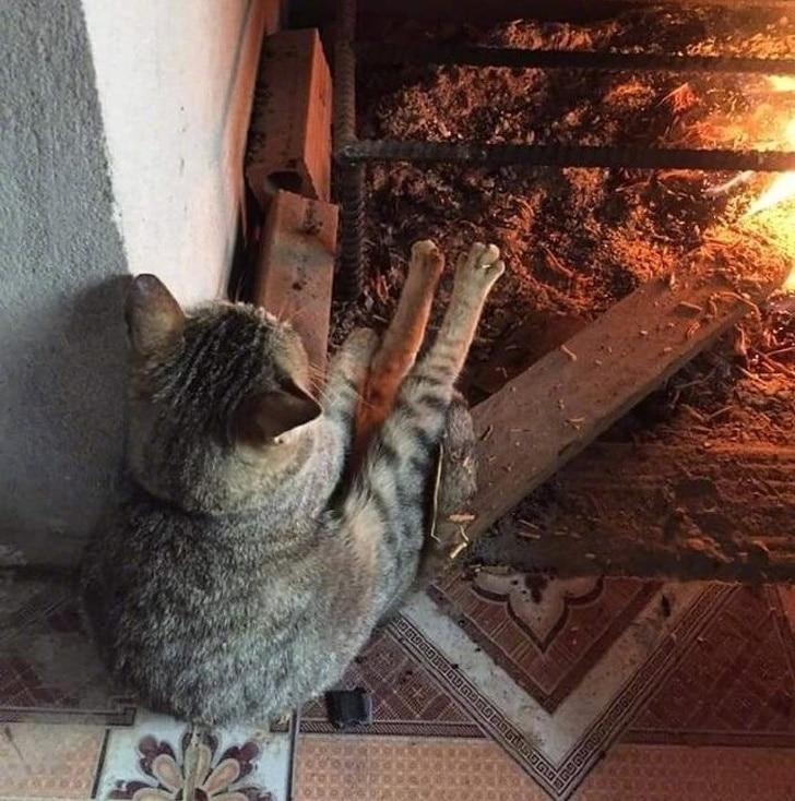 кот греется