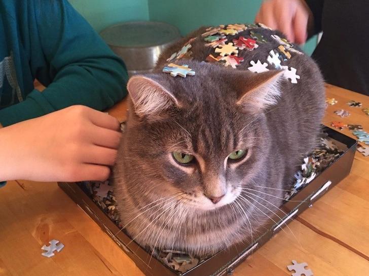 кот с пазлами на спине