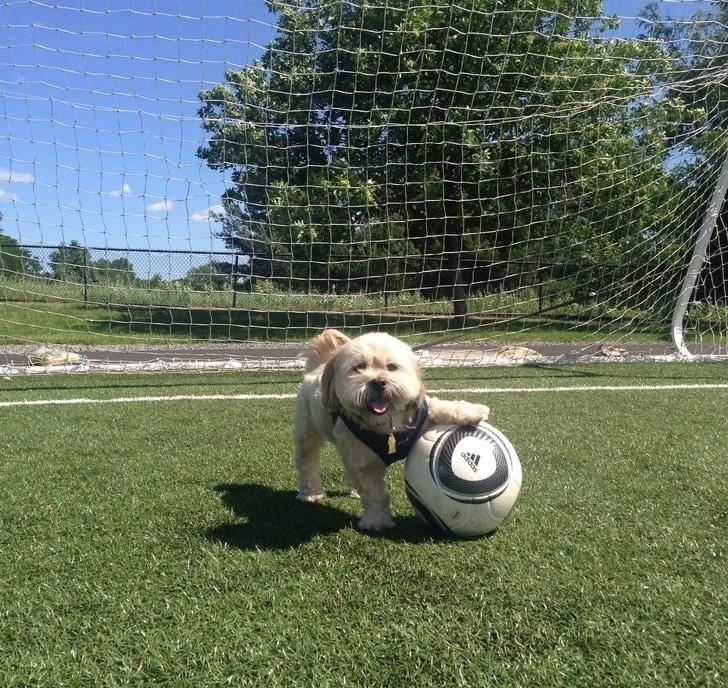 щенок с мячом на футбольном поле