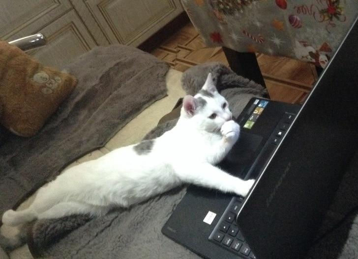 кот лежит перед ноутбуком