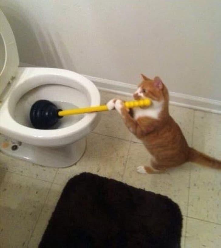 рыжий кот с вантузом