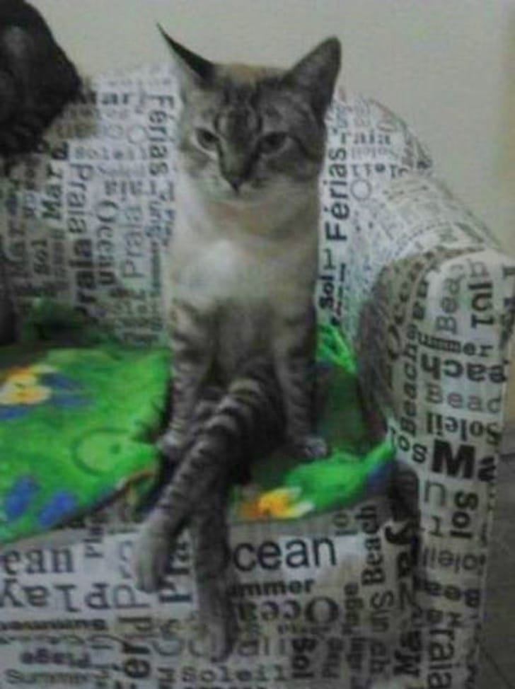 кот сидит на диване как человек