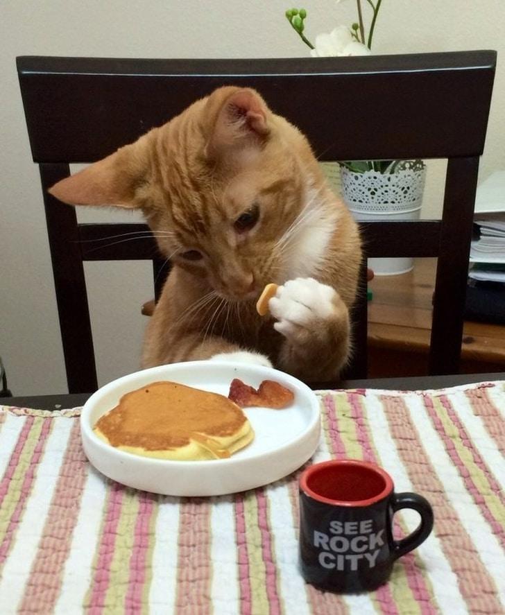рыжий кот ест оладьи