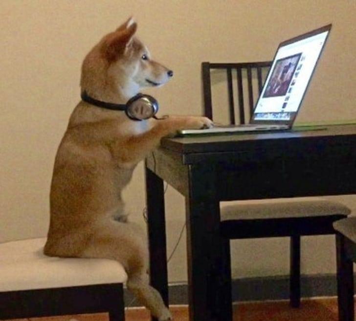 собака сидит перед ноутбуком