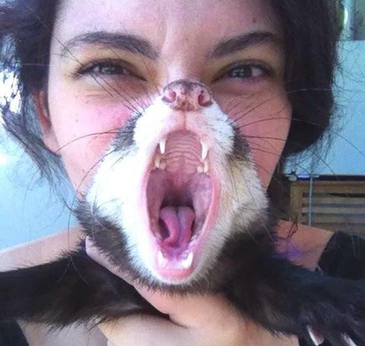 девушка с зевающим котом