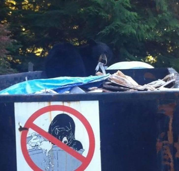 медведь в мусорном ящике